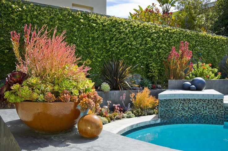 May just have to put some of these around my pool. Amazing succulent display