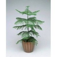 50 best Order plants online in Bangalore images on Pinterest