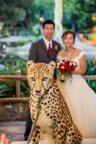 Wild wedding guests at the San Diego Zoo Safari Park.