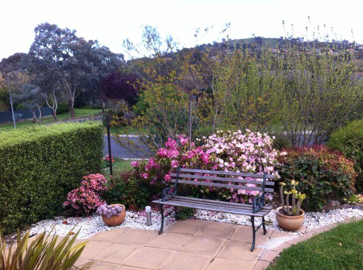 My front garden spring 2013. Canberra, Australia.