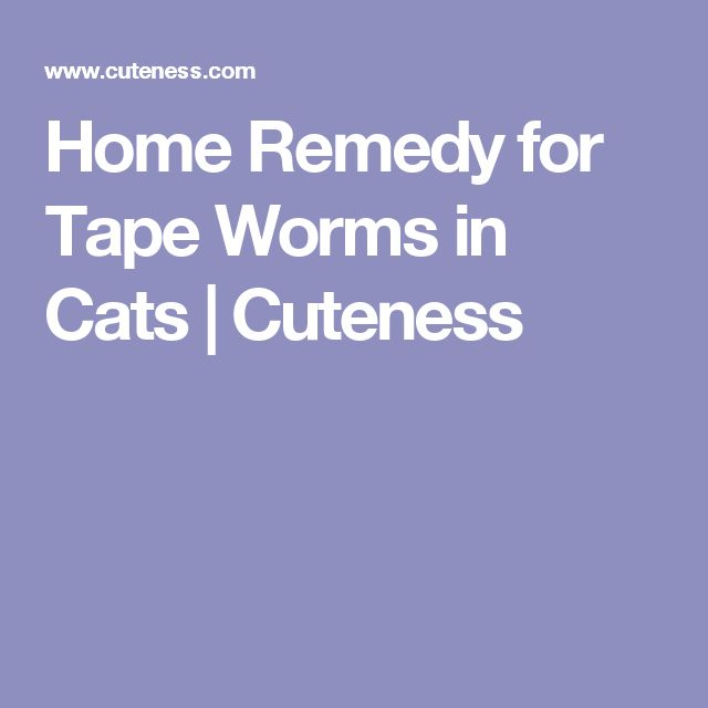Home Remedy for Tape Worms in Cats | Cuteness