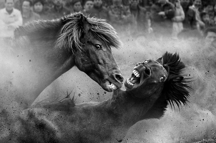 Лошадки милые, говорили они... Боевые кони, Ронгшуй, провинция Гуйчжоу, Китай.