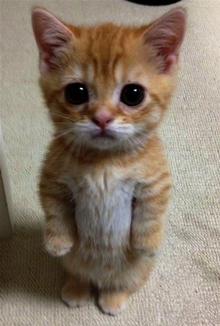 Most Adorable Kitten Cute Little Kittens Cute Animals Kittens