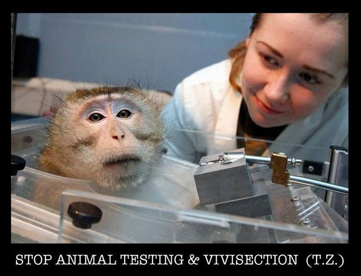 Rules to Carry Experiments on Animals & Humans