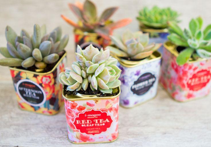 Suculentas: ideias para decorar e presentear