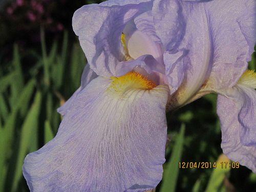 Flor - B Minuto de Dios IMG_1624
