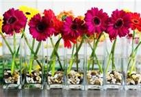 modern wedding centerpieces - Bing ImagesIdeas, Gerber Daisies, Gerbera Daisies, Summer Wedding, Simple Centerpieces, Shower, Wedding Centerpieces, Flower, Center Piece