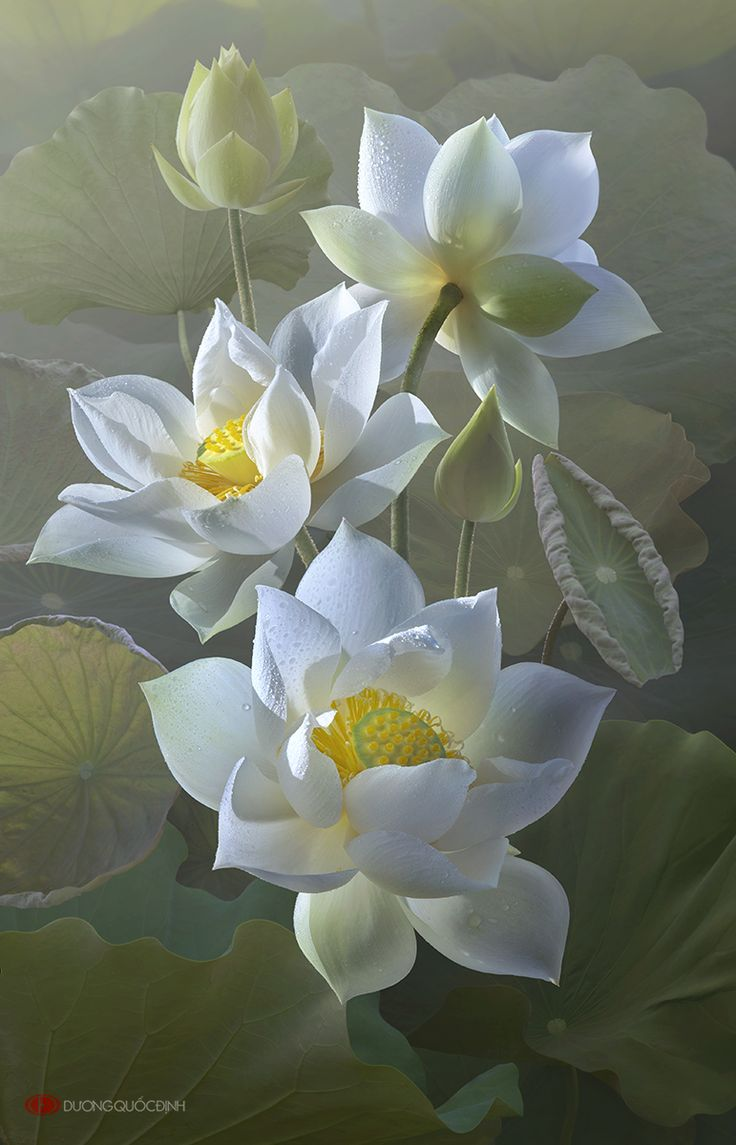 190 best lotus flowers and water lilies images on pinterest lotus by duongquocdinhiantart on deviantart white lotus flowerlotus izmirmasajfo