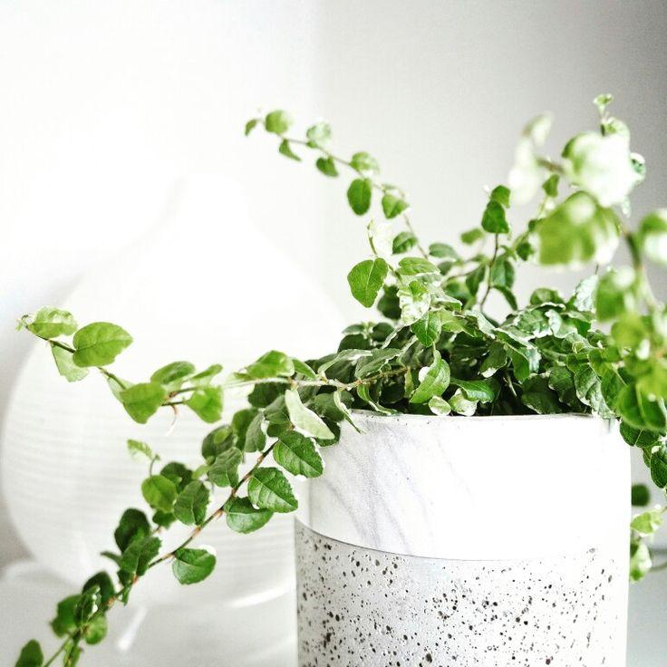 Nous n'avons jamais mis de couleurs au mur, ni de cadres. Les murs blancs et dégagés de messages/images nous reposent l'esprit et mettent en valeur nos plantes vertes.