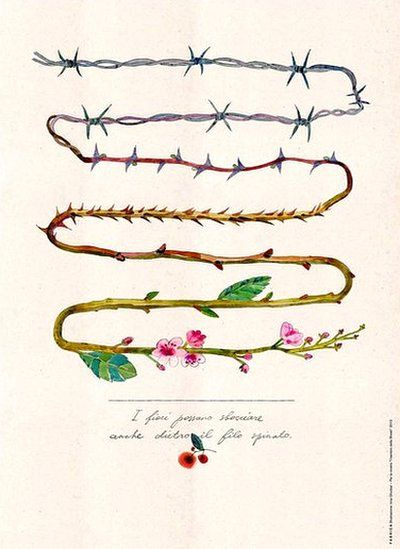 Illustration of barbed wire progressively turning into roses by Irina Gliudza. (Photo: Fabrica)    Part of a commission to transform poems written by children in the Terezin concentration camp into works of art.    Also, 27 January is Holocaust Remembrance Day in the UK.                                                                                                                                                                                 More