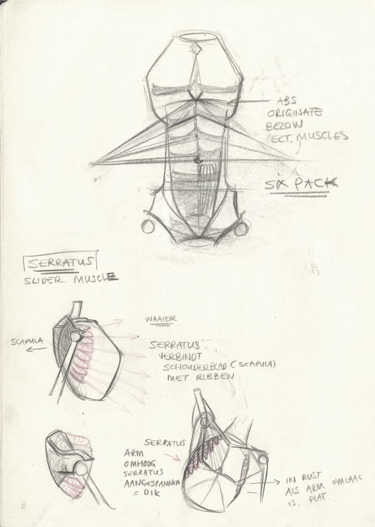 Anatomy drawing lessons
