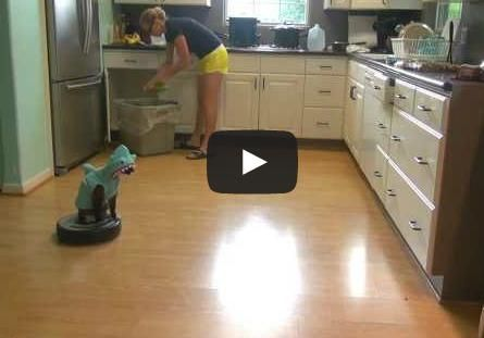 A cat dressed in a shark hoodie riding around on a Roomba. No matter how many times it hits the walls the cat stays on and just keeps wagging it's tail, lol!