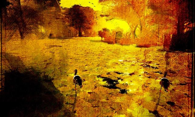 Palo Verde by Amona Savira, via Flickr