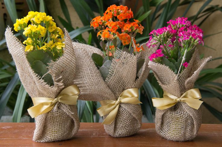 Lindas e floridas Kalanchoes em juta, arrematadas com laço de cetim.
