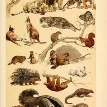 Free Vintage Illustrations of Wild Animals