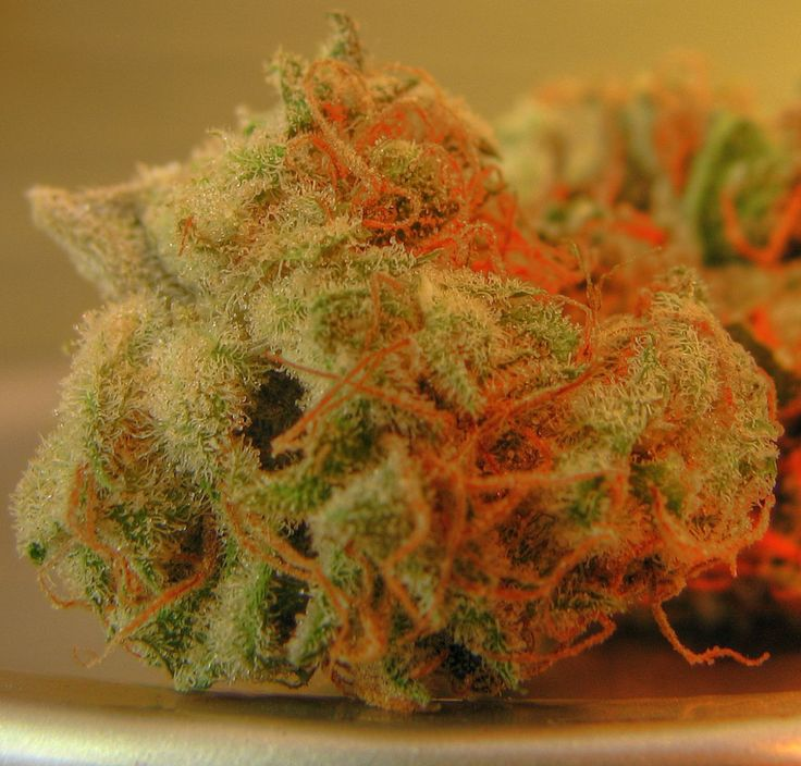 ::that fire::hairy weed::funky nugs::this is what loud looks like::damn right::kush::pot:: marijuana::ganja::cannabis::chronic::420::blaze::NoEllie0123