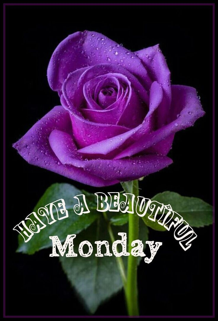 1000 ideas about good morning monday images on pinterest - Good morning monday images ...