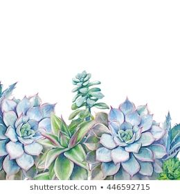 Watercolor succulents background. Hand painted green