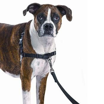 """PetSafe+Easy+Walk+Black+Dog+Harness+-+Large,+26""""-36""""+girth,+never+causes+coughing,+gagging,+or+choking+because+the+chest+strap+rests+low+across+the+breastbone,+not+on+the+tracheal+area.+Quick+snap+buckle+on+the+shoulder+and+belly+straps+make+it+easier+to+get+the+harness+on+and+off. - https://www.petco.com/shop/en/petcostore/product/petsafe-easy-walk-black-dog-harness"""