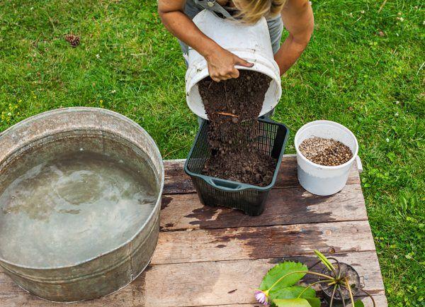 crear-un-jardin-acuatico-en-un-contenedor-03