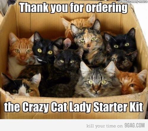Crazy Cat Lady Starter Kit: Crazy Cats, Lady Starter, Animals, Crazycatlady, Funny, Crazy Cat Lady
