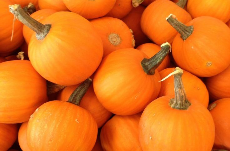 Pumpkin Patches to Visit in Alberta - This Big Adventure