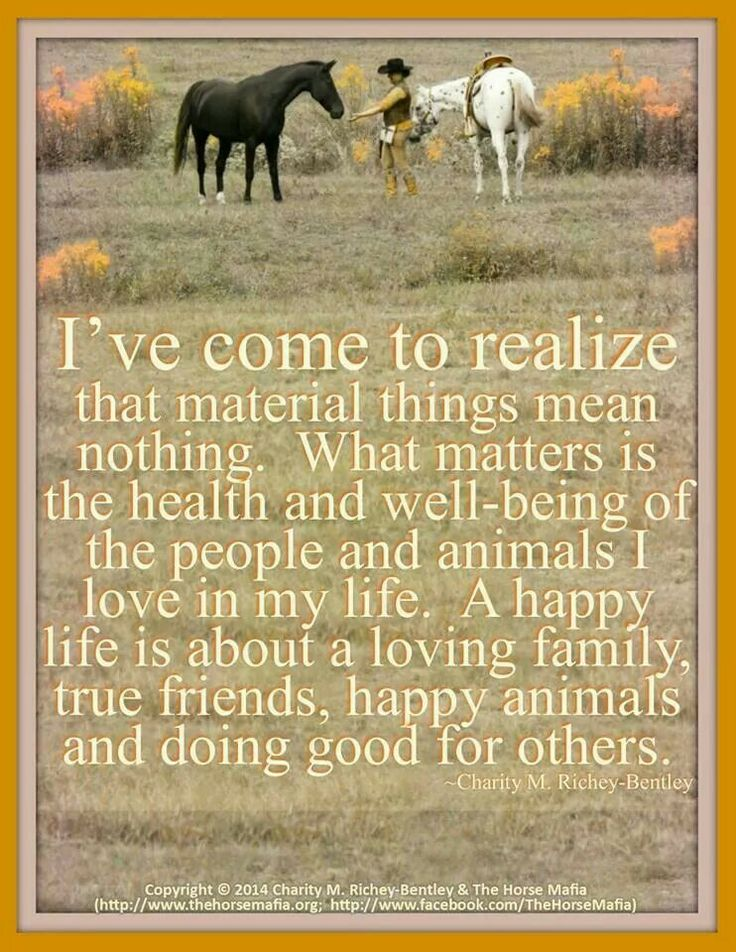 Material things mean nothing True friends, Happy animals
