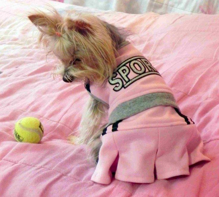 Mejores 25 imágenes de los perros mas lindos en Pinterest ...
