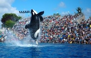 https://animalpetitions.org/129122/stop-popular-band-from-performing-at-seaworld/ A popular Christian band is planning a performance at SeaWorld despite the park's notorious reputation for animal cruelty. Demand that MercyMe remove its support from SeaWorld's desperate attempt to increase attendance.