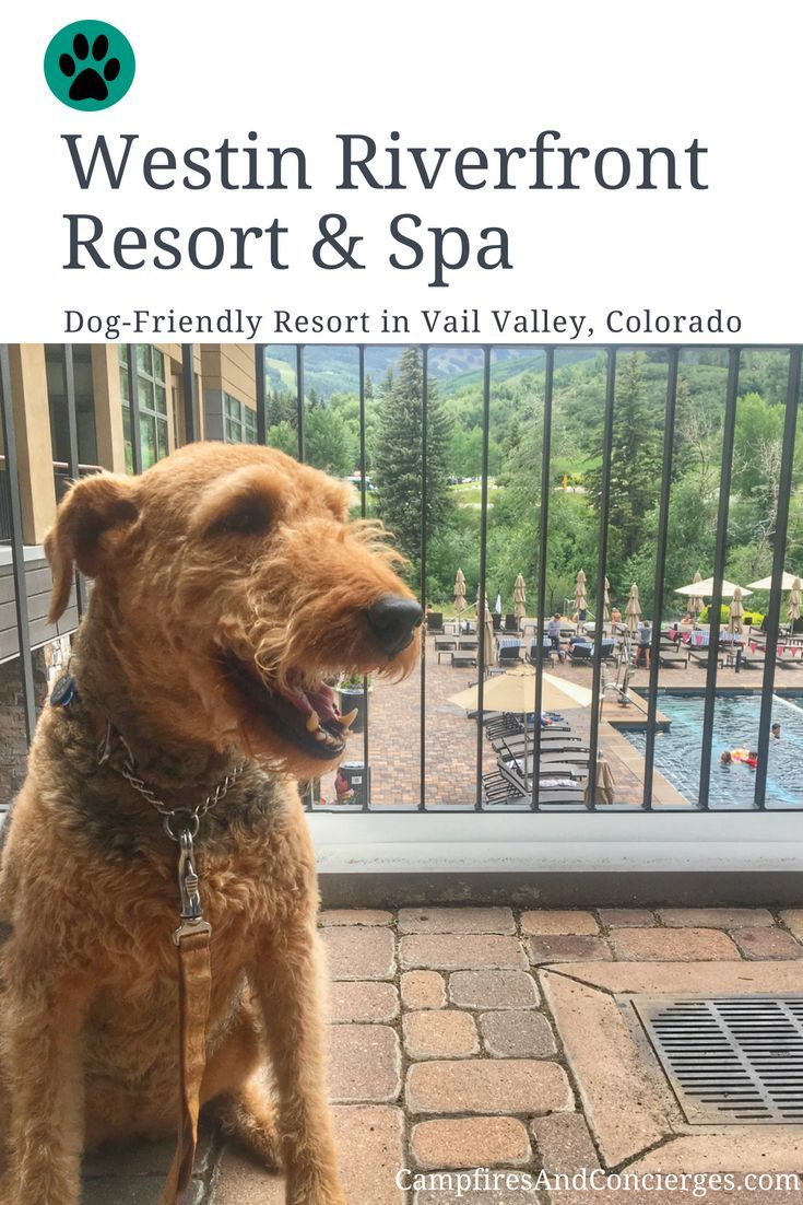 Westin Riverfront Resort Spa Luxury Dog Friendly Hotel In Vail