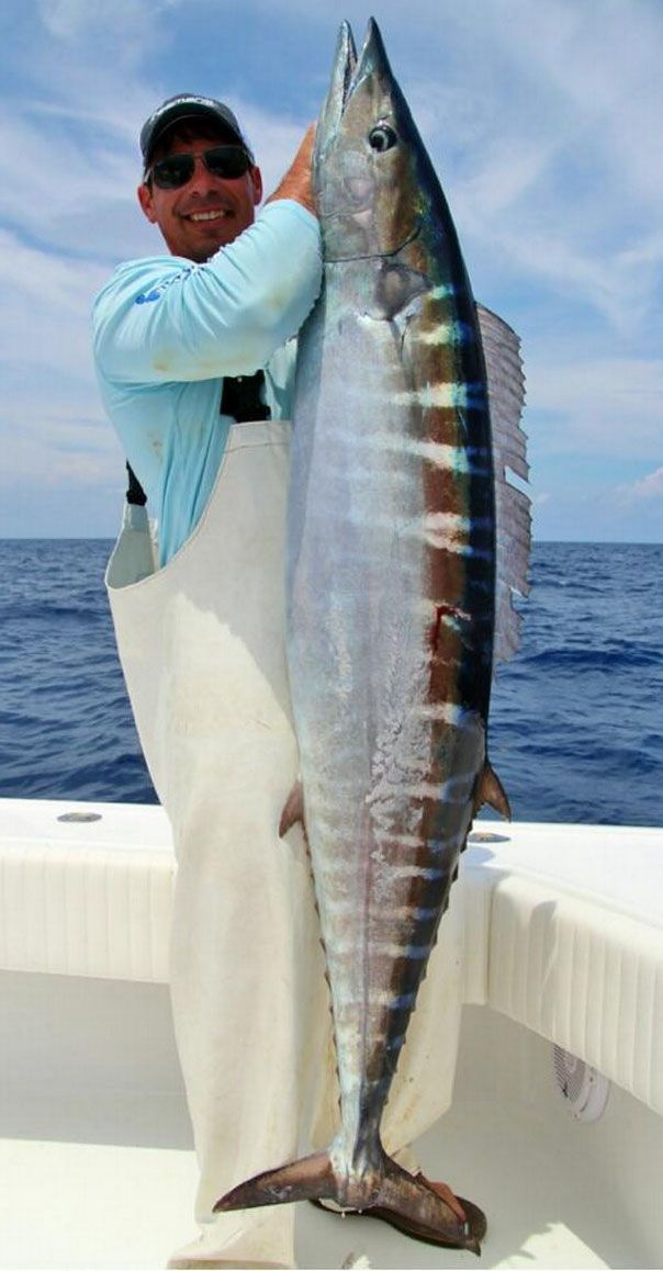giant fish to be caught