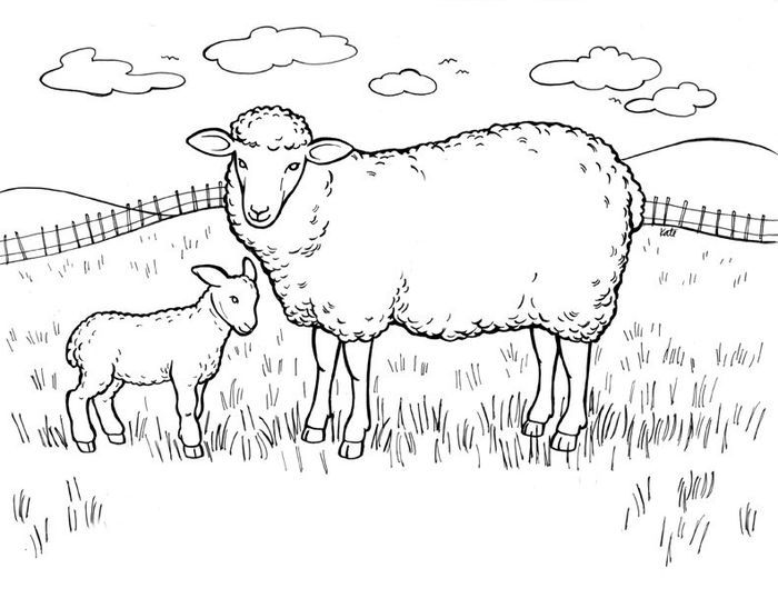 Flock Of Sheep Coloring Pages Farm Animal Coloring Pages Horse Coloring Pages Bible Coloring Pages