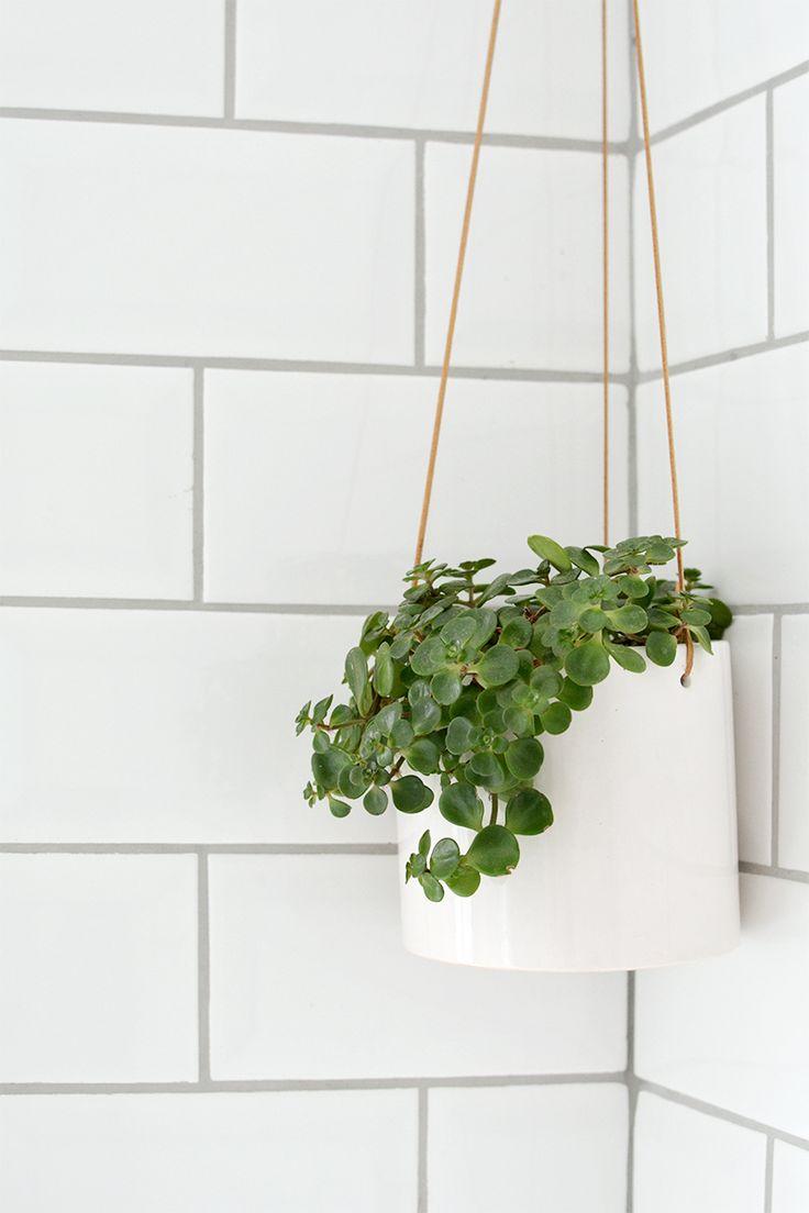 486 besten botanical bilder auf pinterest gr npflanzen zimmerpflanzen und indoor garten - Zimmerpflanzen groay ...