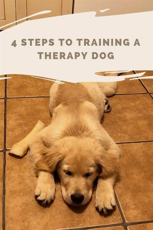 Twin Ports Dog Training Duluth Mn Dog Training Videos Cesar