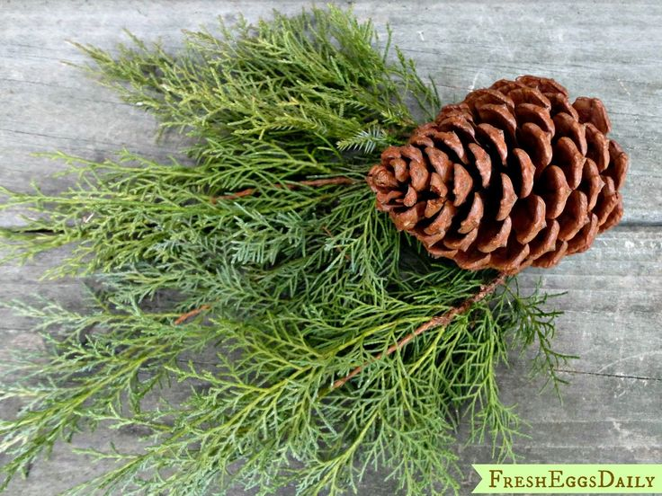 Use pine needles or shavings or put pine boughs in your coop - Rodents dislike the scent of pine. Pine boughs will be the most effective of course, but pine shavings might help mice decide they don't want to bed down on the floor.