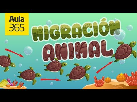 ¿Por qué Migran los Animales? | Videos Educativos para Niños - YouTube