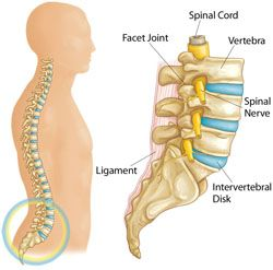 Whether spine surgery or a more conservative treatment is found to be necessary, Los Angeles Spine Surgeon can help.