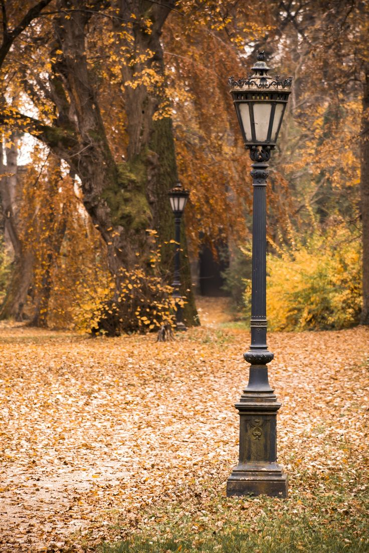 Autumn by Kovács Gábor on 500px