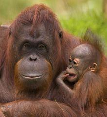 WWF España - Adopción simbólica de una especie