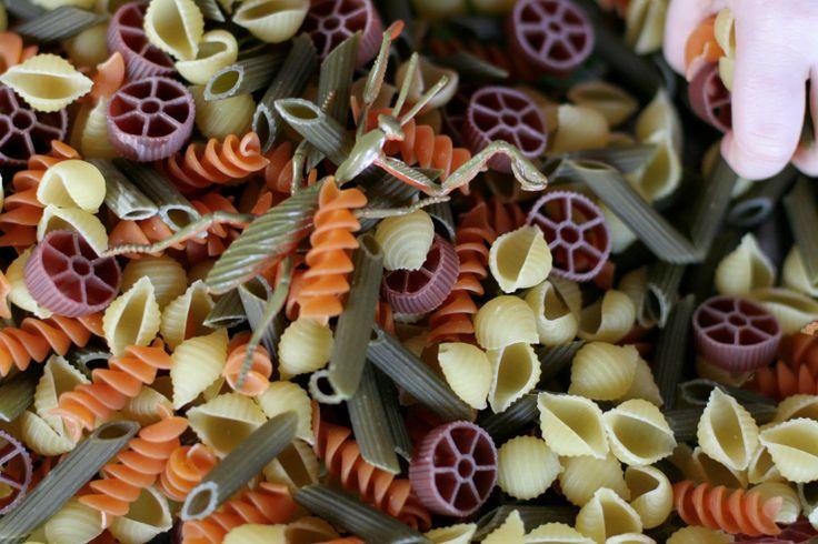 "Pasta & minibeasts ("",)"