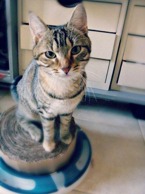 DIY tutoriel un griffoir pour chat