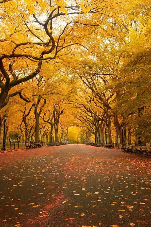 Autumn #photos #nature #beauty #surreality