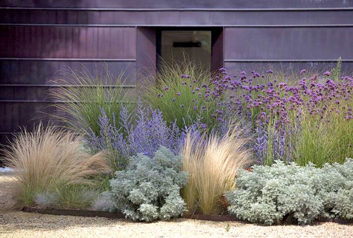 Stylish garden wild grasses