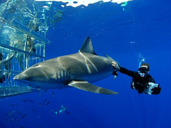 best sharks images sharks great white shark  job shark careerone coolest job ever q a andy casagrande shark