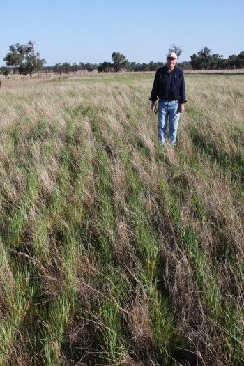 10 best c farming keyline images by dakotamundi on pinterest pasture cropping a regenerative solution from down under fandeluxe Image collections