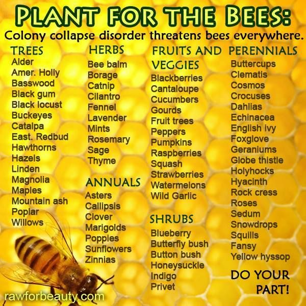 PLANT ORGANIC ONLY Plant for the Bees - Making a list of these plants. Anything to help the bees come back.