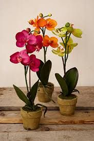 Shop clay and plastic made clear orchid pot online from Green Barn Orchid Supplies at affordable prices. Buy orchid pots of your required size and shapes from the online store now.