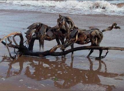 driftwood horses heather jansch 22