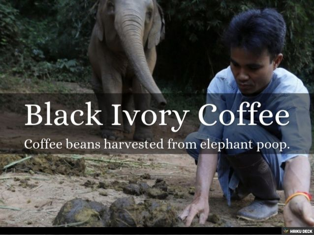 Image result for black ivory coffee