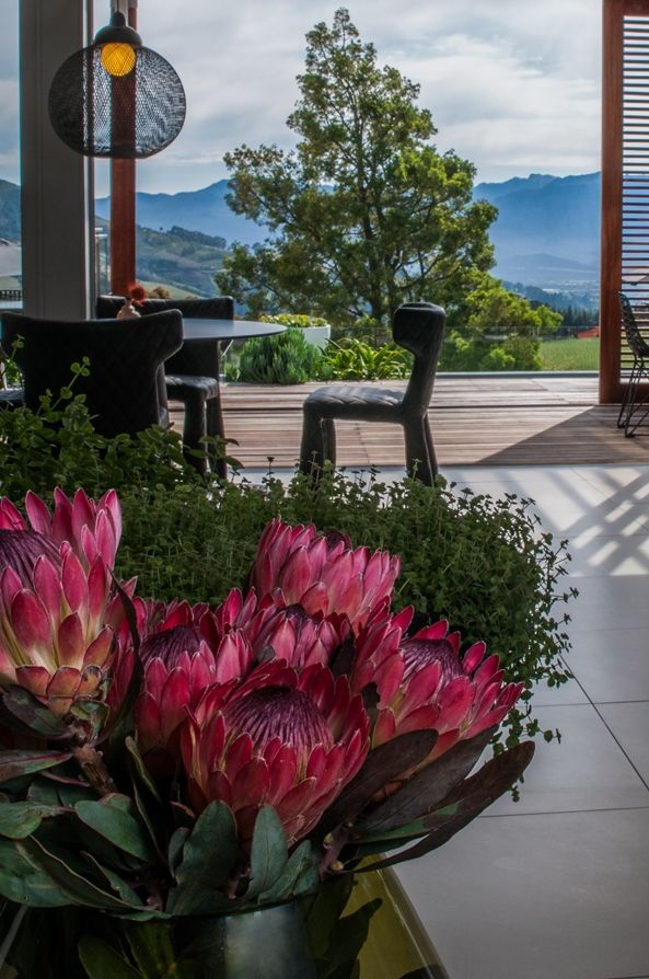 South Africa's national flower displayed in our lounge. #proteas #Southafrica #Cloudsestate http://cloudsestate.com/gallery.html